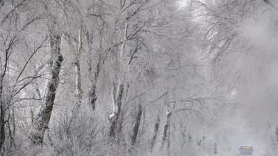 Debrecen, 2016. január 9.Egy autóbusz halad a zúzmarás fák között Debrecen közelében 2016. január 9-én.MTI Fotó: Czeglédi Zsolt