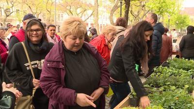 A Szent István téren 3000 tő egynyári virágpalántát osztottak ki (Archív fotó: Kovács Dénes)