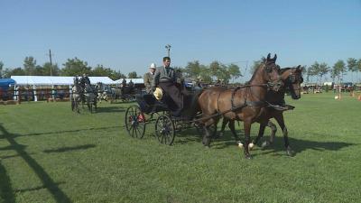 Fogathajtó nappal őrzik a lovashagyományokat Kondoroson. Fotó: Kugyelka Attila