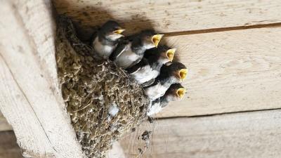 Fotó: eletszepitok.hu