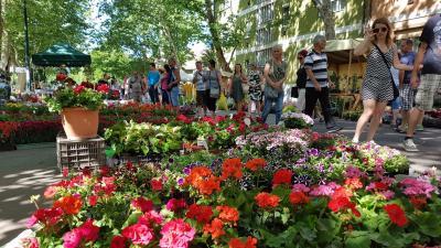 Virágba borult egy teljes utca Gyulán a hétvégén. Fotó: Kovács Dénes