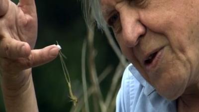 Sir David Attenborough with Joe Petersburger and the mayflies... (Youtube)
