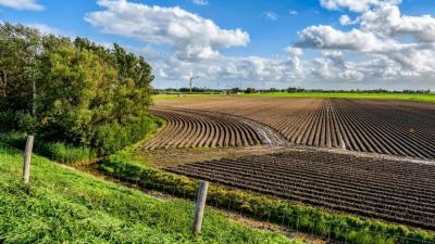 Illusztráció: agrarszektor.hu
