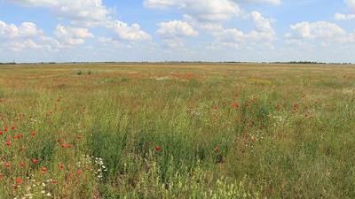 Negyven növényfaj térhetett vissza a Kopáncsi-pusztára a Körös-Maros Nemzeti Park Igazgatóság szakembereinek segítségével. Fotó forrás: kmnp.hu / Balogh Gábor