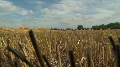 A búzából kevesebb termett idén, de drágábban lehet majd eladni. Fotó: Kugyelka Attila