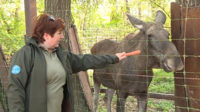 Jávorszavas  a Körösvölgyi Látogatóközpont és Állatparkban Fotó: Kovács Dénes