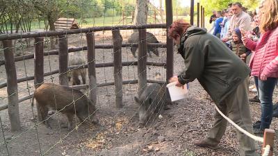 Látványetetésekkel ünnepelte az állatok világnapját a Körösvölgyi Látogatóközpont és Állatpark. Fotó: Kovács Dénes