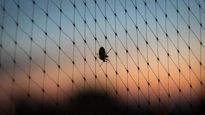 Tömegesen vagy egyedül: a poloskák mindent ellepnek. Fotó: behir.hu/V.D.