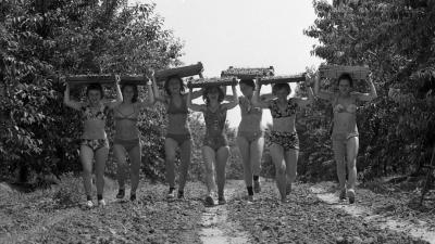 Építőtábor 1974-ben (forrás: FORTEPAN/Urbán Tamás)