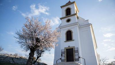 A 2019-es év európai fájának megválasztott pécsi havihegyi mandulafa 2019. március 20-án. MTI/Sóki Tamás
