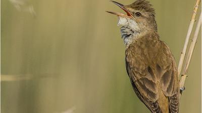 BirdPhotography.hu