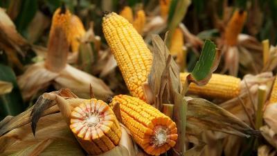 Fotó: agraragazat.hu