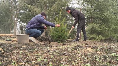 Püspöki Zsolt és Alt Norbert ültetik a fenyőket – (Fotó: behir.hu)