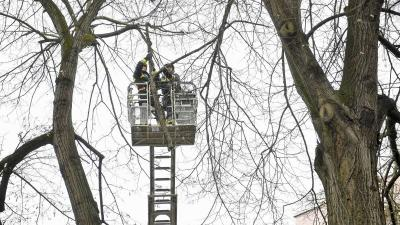 A viharos szél miatt letört, balesetveszélyes fákat távolítanak el a tűzoltók. Forrás: MTI