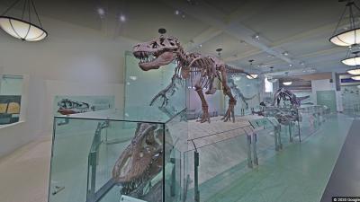 Természettudományi múzeum. Fotó: Google Arts&Culture