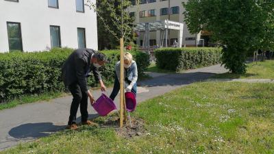 Örökbefogadott fákat gondoz a Békéscsabai Médiacentrum Kft. szerkesztősége.Fotó: behir.hu/Sipos Gábor