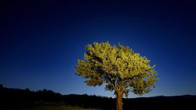 Vadkörtefa egy hosszú expozíciós idővel készült felvételen Nógrádmegyer közelében 2020. május 7-én. Május 10. a madarak és fák napja. MTI/Komka Péter