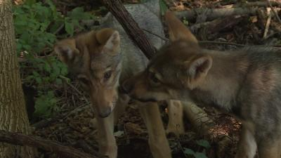 Ajsa és Kurszán már teljesen otthon érzi magát Szarvason az állatparkban Fotó: Kugyelka Attila