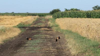 A nőstény molnárgörgény (jobbra hátul) pihen két kölykével Fotó forrás: Balogh Gábor / kmnp.nemzetipark.gov.hu