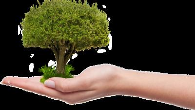 Illusztráció. Forrás: pixabay.com