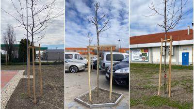 Békéscsabai áruházak parkolójába is telepítenek fákat. Forrás: bekescsaba.hu