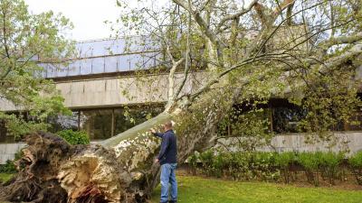 Országszerte fákat döntött ki, tetőket rongált meg a szélvihar (MTI fotó: Lakatos Péter)