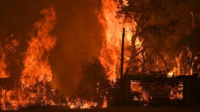 A pusztító bozóttűz. (A kép forrása: nlc.hu)