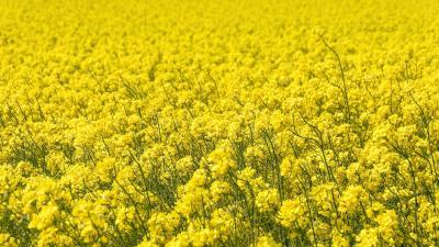 Fotó: agroforum.hu