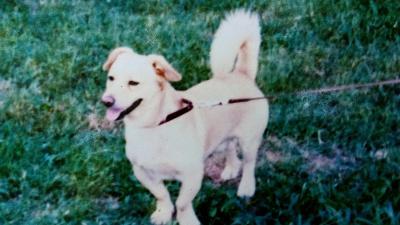 Rolly kutya – Forrás: Facebook